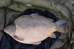 NG Fisheries Carp For Sale C4 12lb