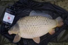 NG Fisheries Carp For Sale C4 12lb
